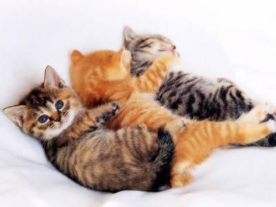 Bebe chatons carolane54590 - Enlever les puces sur un chaton ...